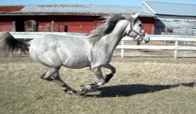 Legacy Galloping At Age 22 Months